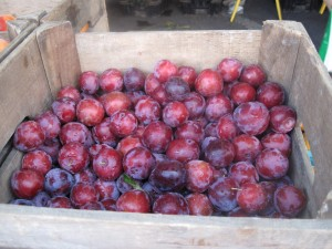 Plums from Migliorelli Farm in Tivoli