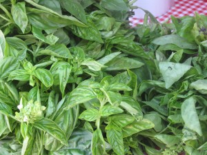 Basil from  Migliorelli Farm.  The smell is divine...