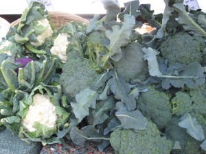 Broccoli and Cauliflower from Barber's Farm in Middleburgh