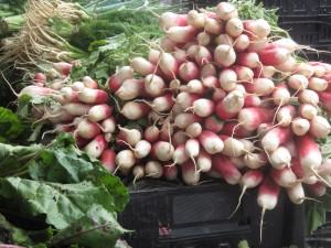 Radishes from Migliorelli Farm