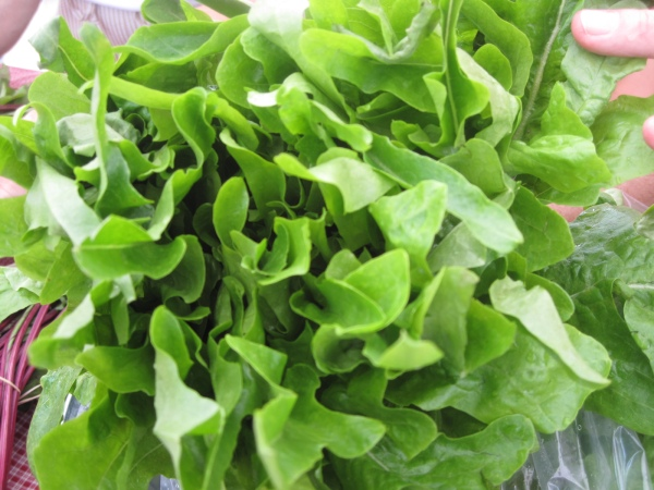 Oak Leaf Lettuce from Full Quiver Farm